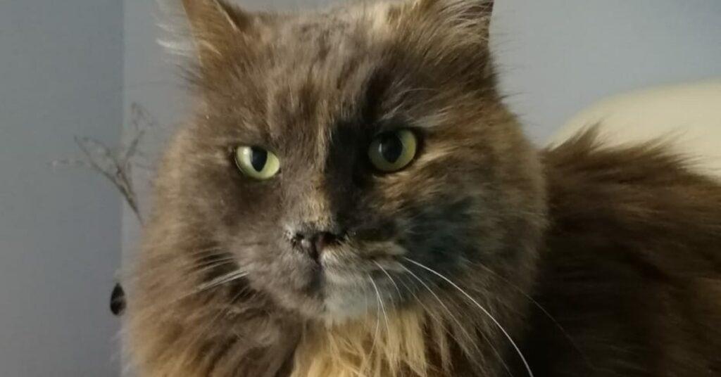 Principessa Leyla gatta in adozione