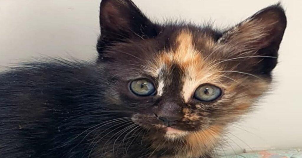 Quattro gattini dal musetto particolare cercano casa