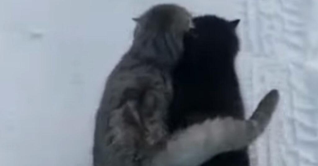 Gatti che si abbracciano