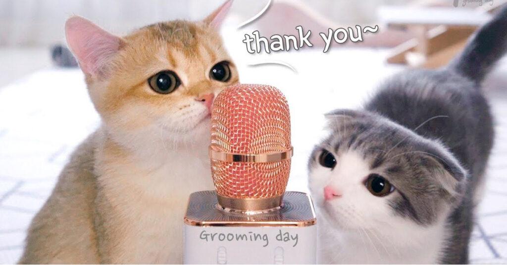 Gatto con un microfono