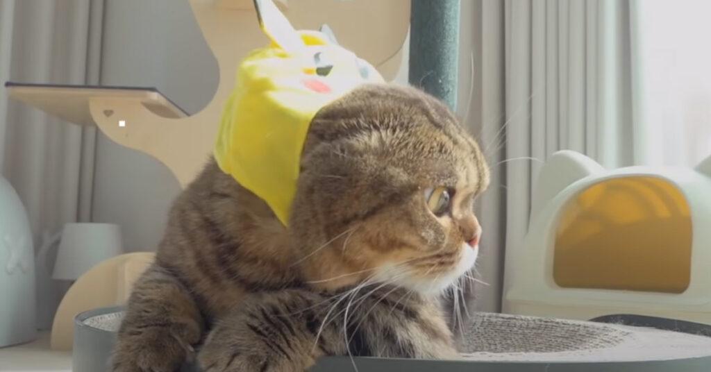 Gatto travestito da Pokemon