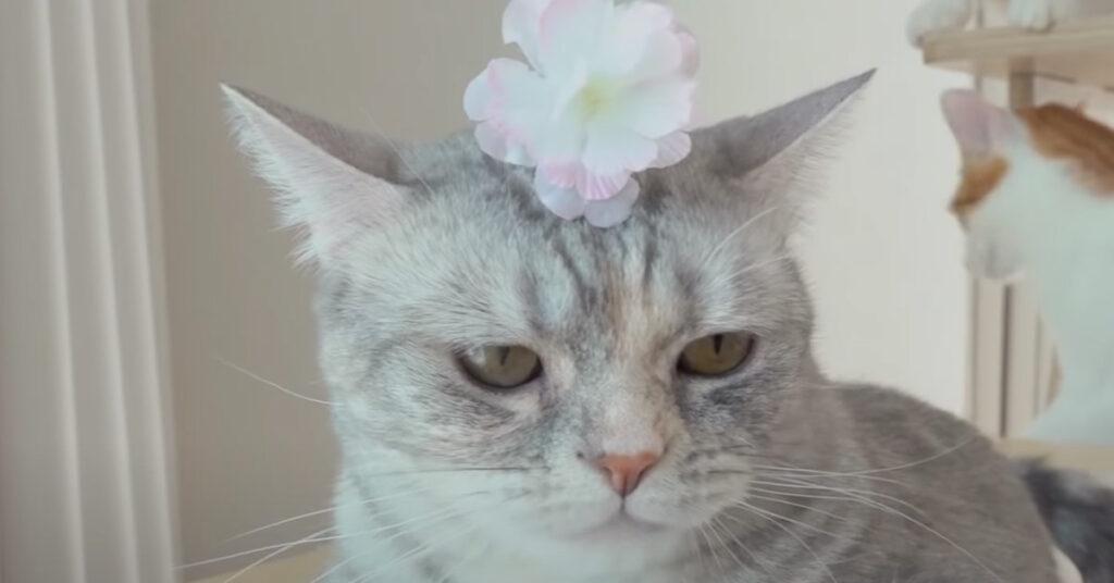 Gatto con un fiorellino in testa