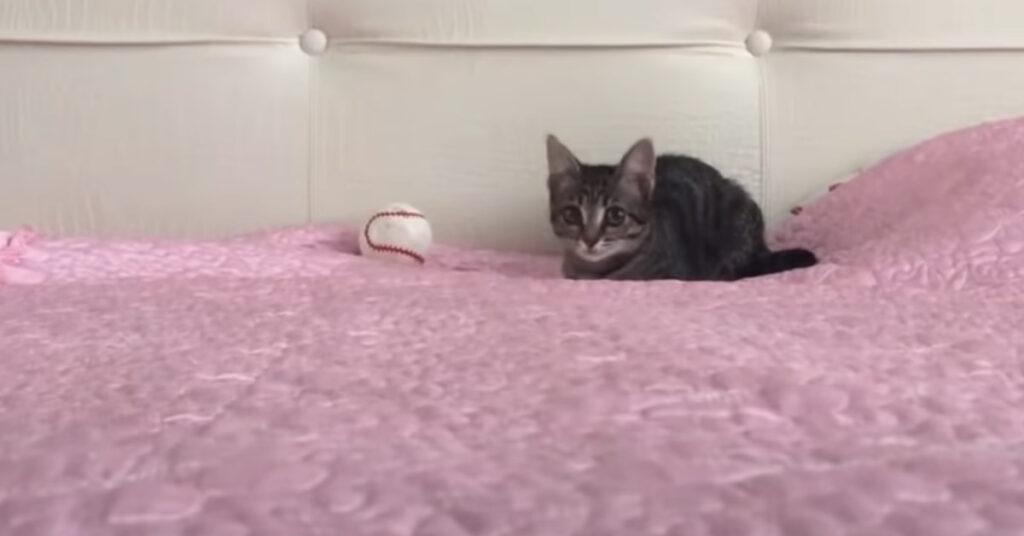 Gattino sul letto