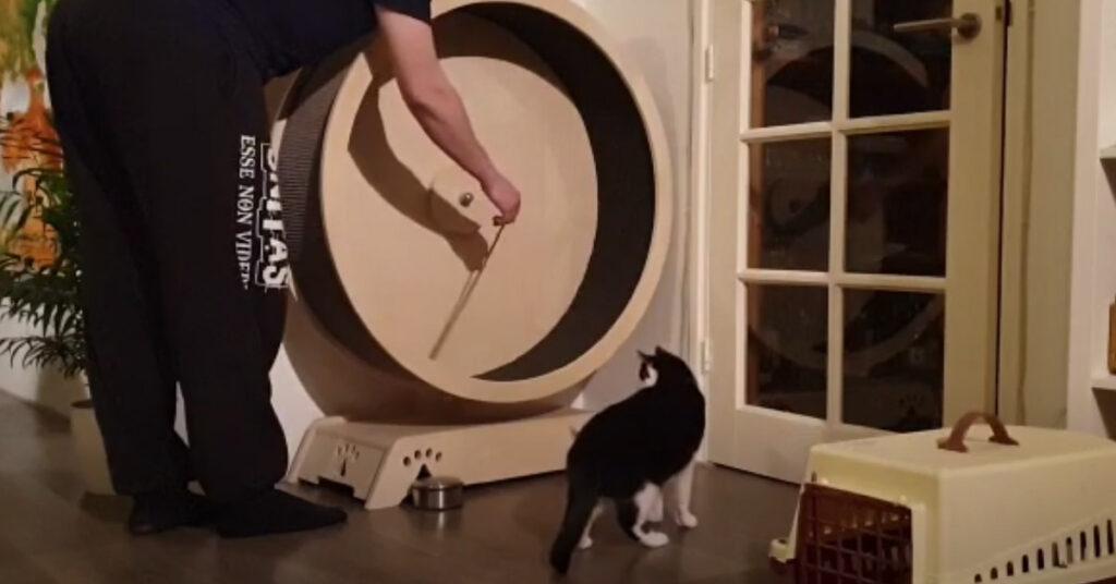 Gatto con il proprietario