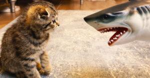 Gattino contro uno squalo