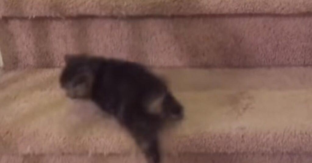 Piccolo gattino che sale le scale