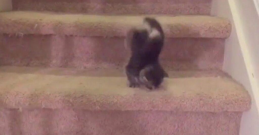 Gattino che cade dalle scale
