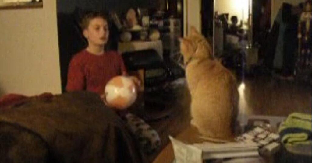 Gatto e bambino che giocano insieme