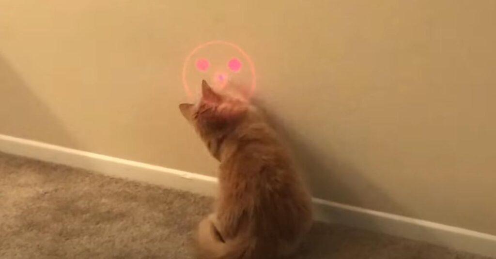 Gatto che gioca con una luce