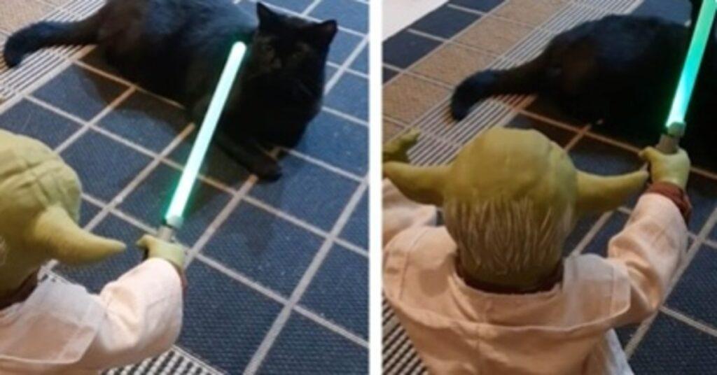 Nori gattina video