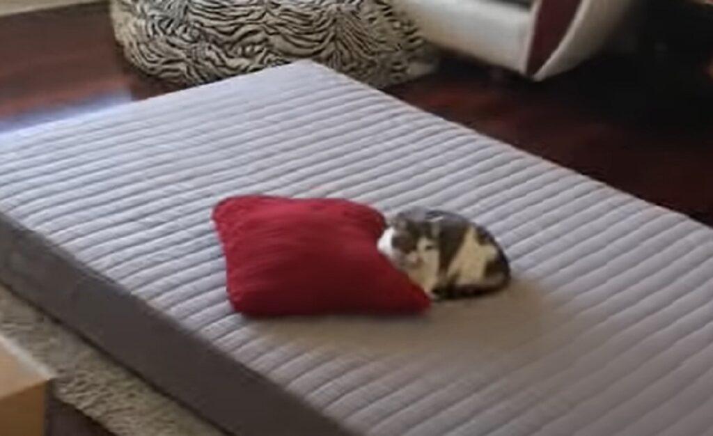 gattina lily letto