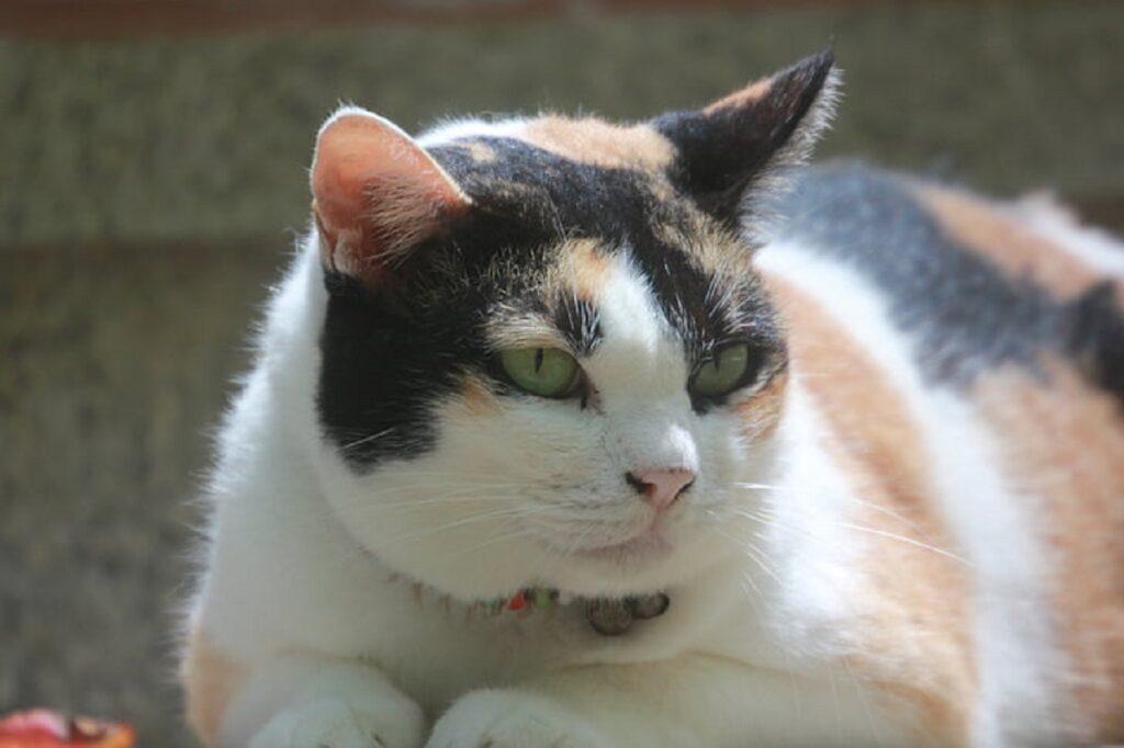 gatto felino dolce