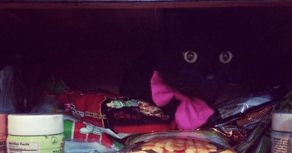 adottare un gatto-nascondino