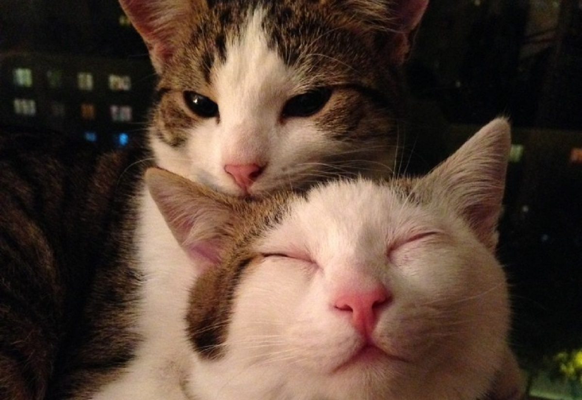 adottare un gatto-amici nemici