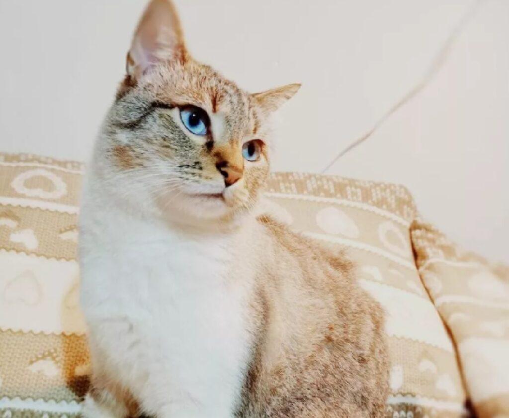 jackson gatto morde ritrova rifugio