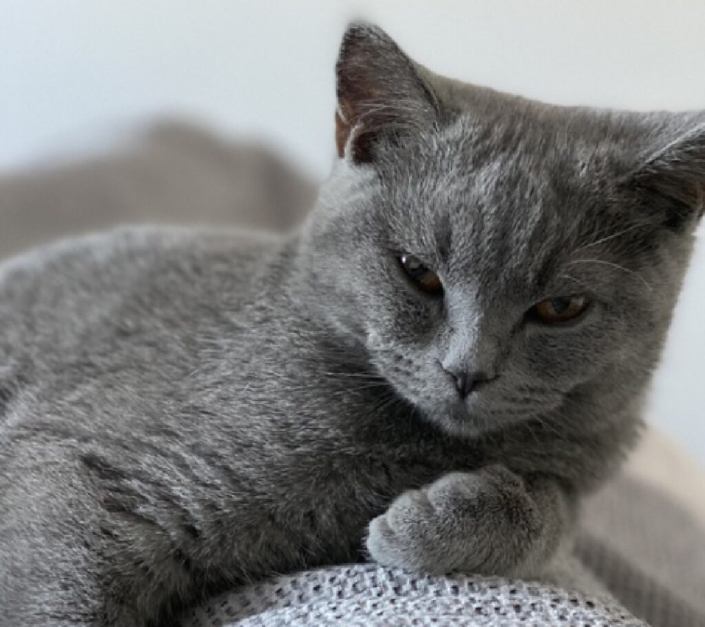 bergamo boom di adozioni nella provincia gatti