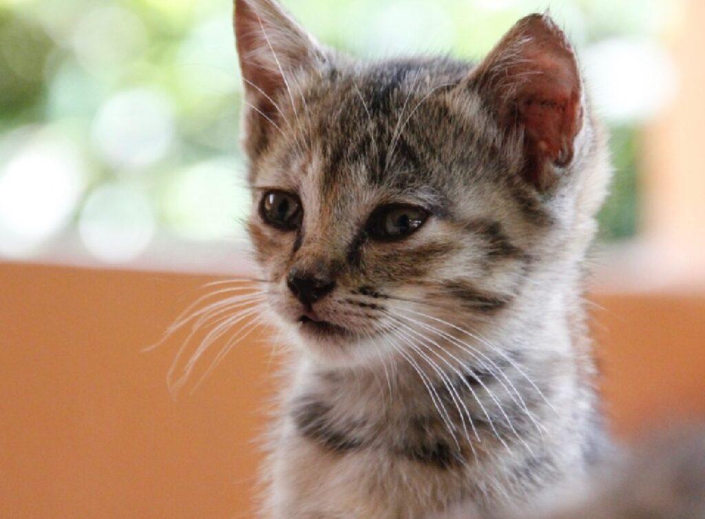 gatti adozioni situazione pandemica