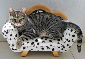 gatto sul divanetto