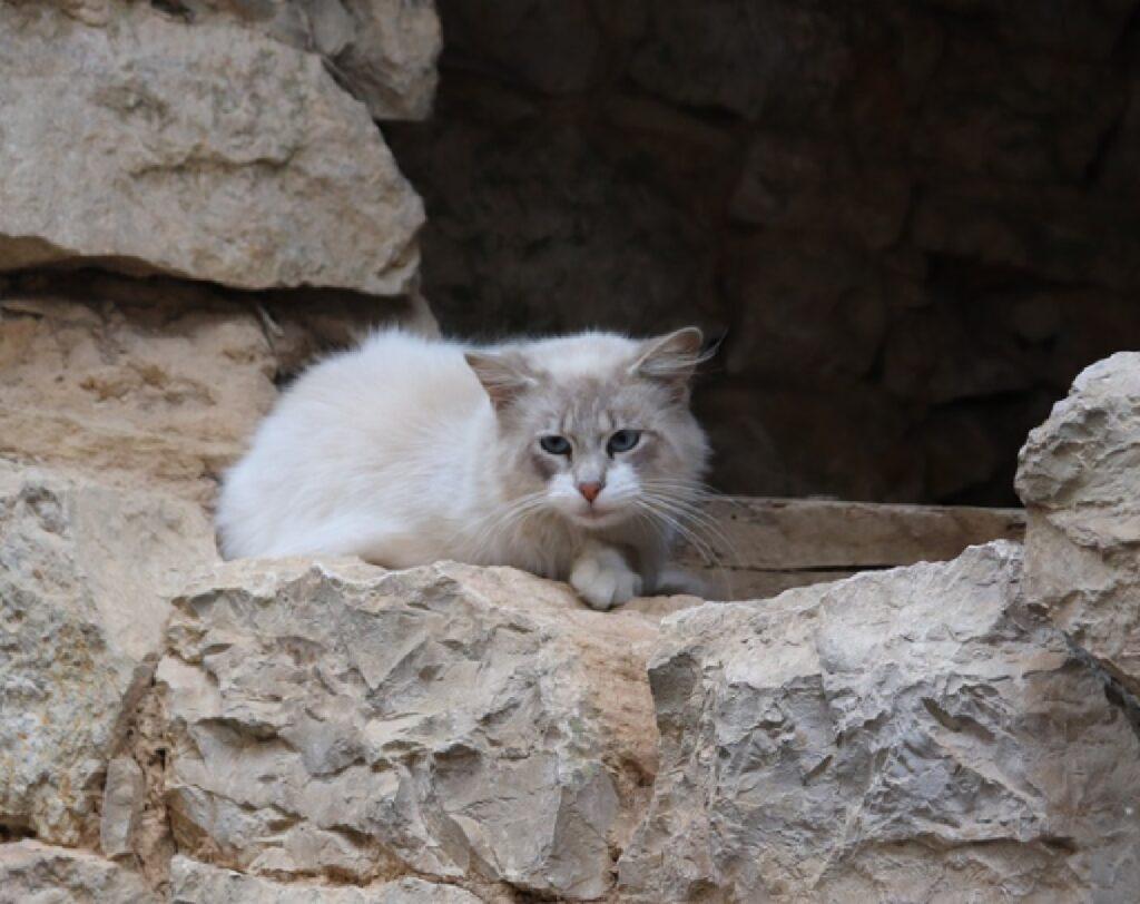ceglie messapica gatti in pericolo causa criminale