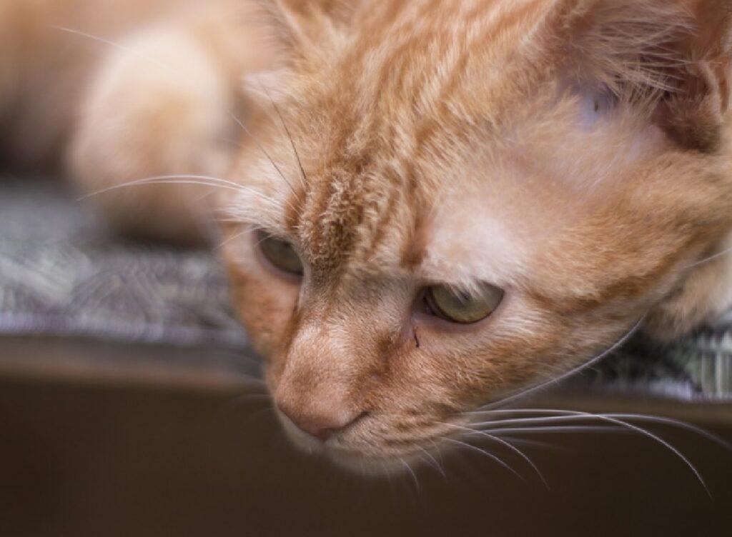ceglie messapica gatti colonia in pericolo