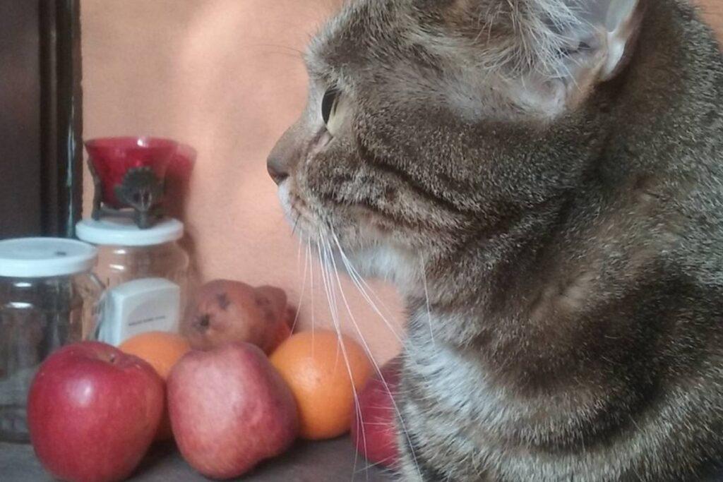 gatto con mele