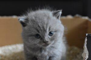 piccolo gattino nella scatola