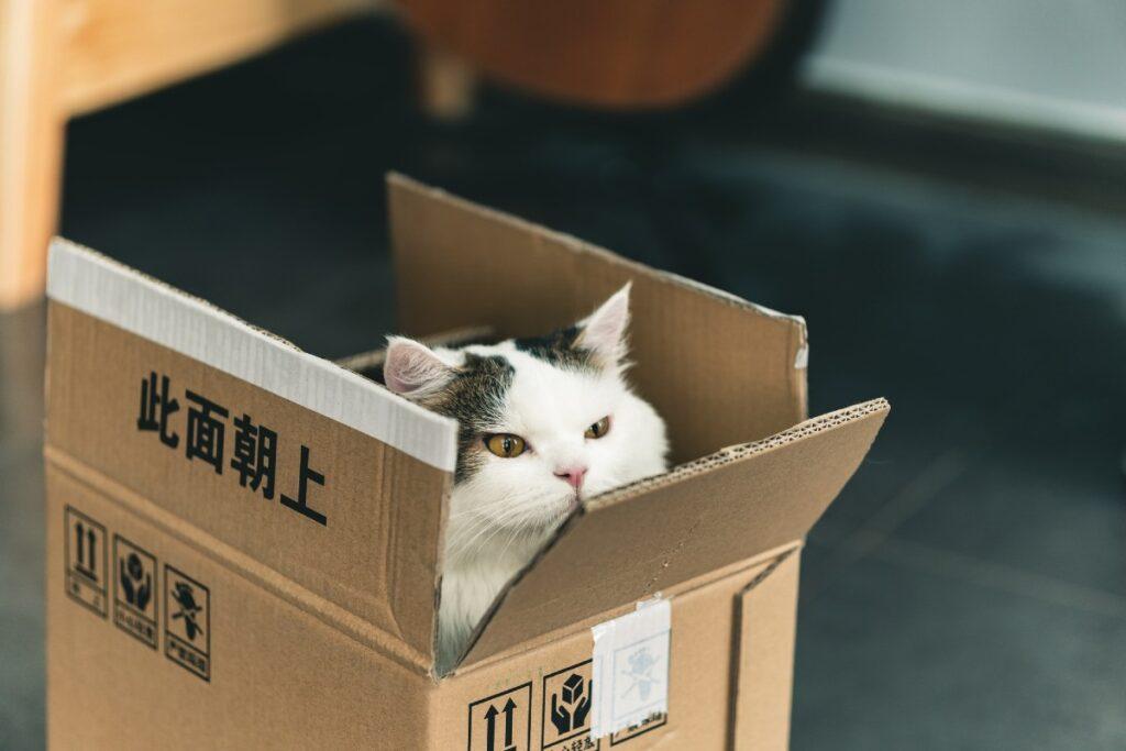 gattino che fa la pipì
