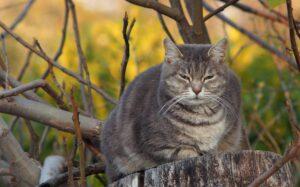 gatto grigio sul tronco