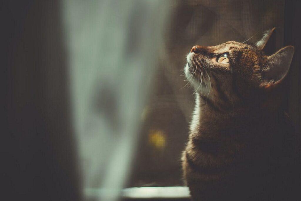 gatto al crepuscolo