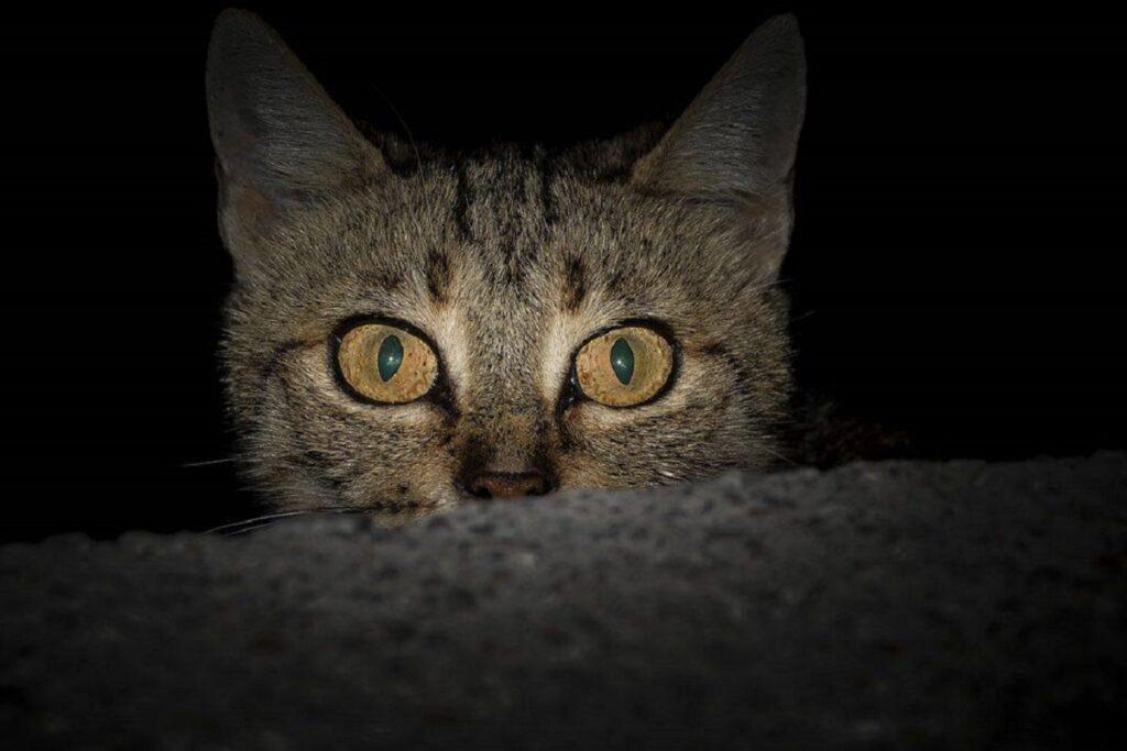gattino di notte