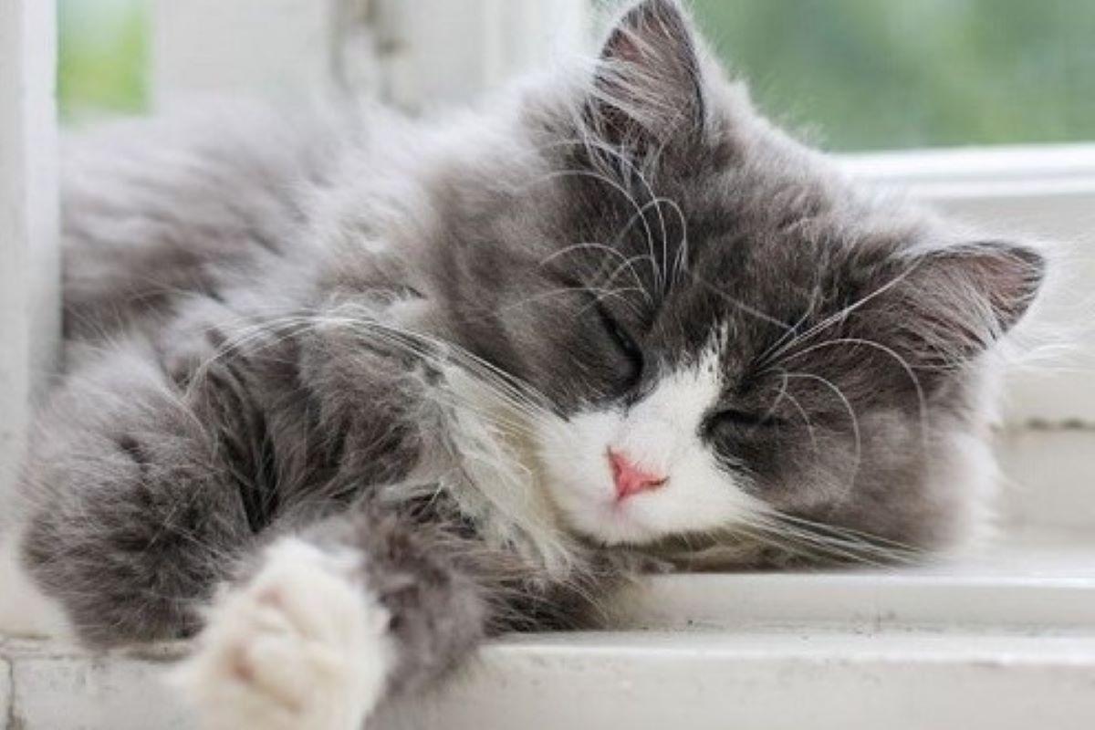 cosa fanno i gatti tutto il giorno