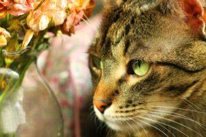 gatto vicino a vaso di fiori