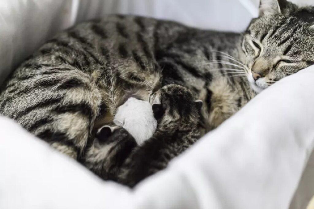 mamma gatta e gattini nella cuccia