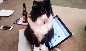gatti canaglie-laptop