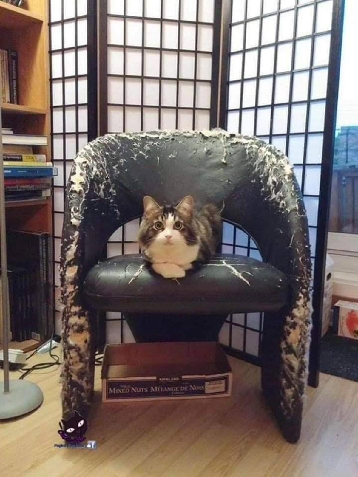 gatti che hanno combinato un casino-divano