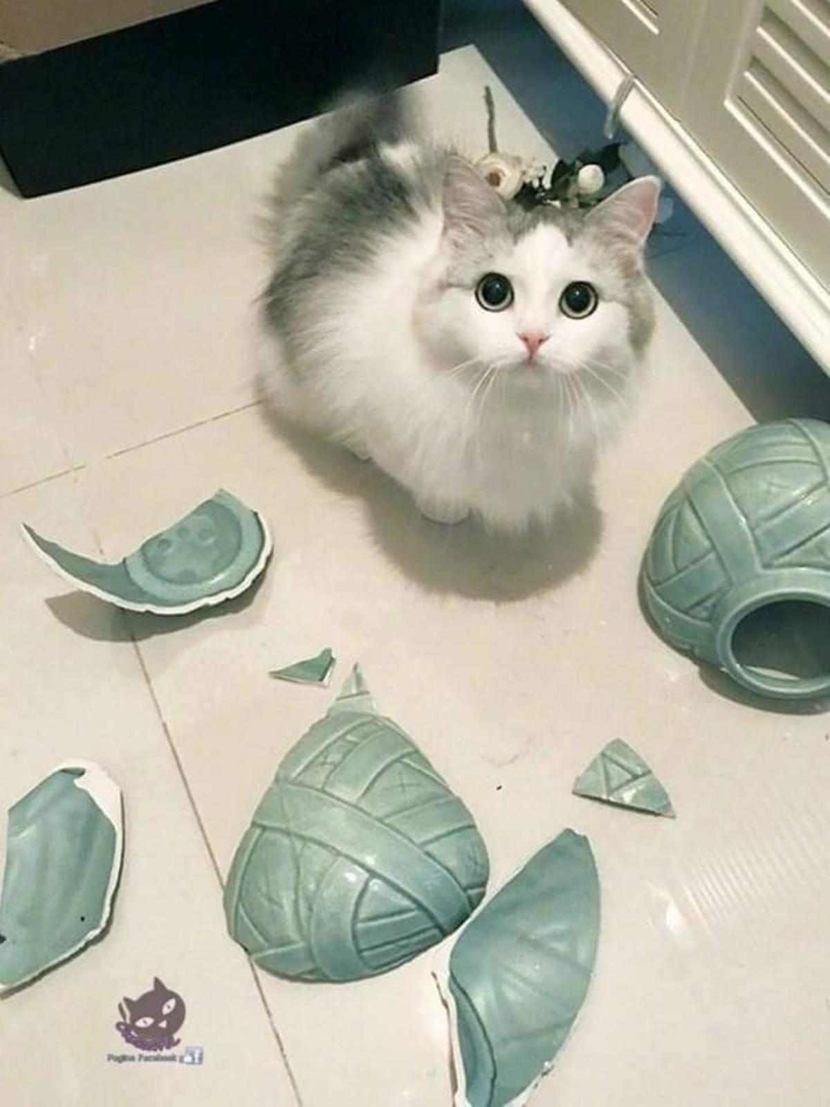 gatti che hanno combinato un casino-vaso