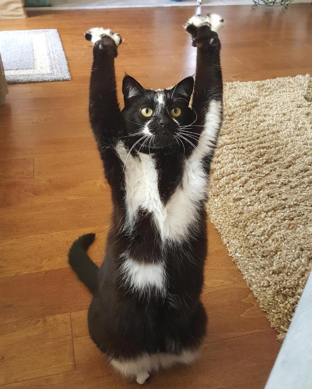 gatti perfetti-zampe in alto