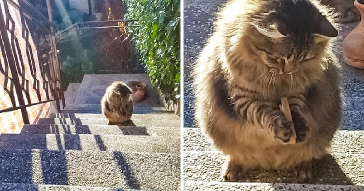 gatti perfetti-gatto e molletta