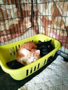 Gatti del rifugio