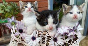 gattini in cerca di casa