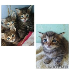 Gatti cercano casa