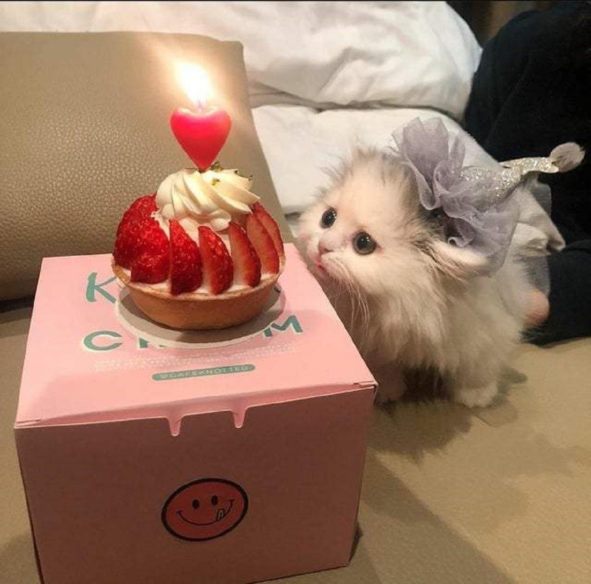 compleanno gatto