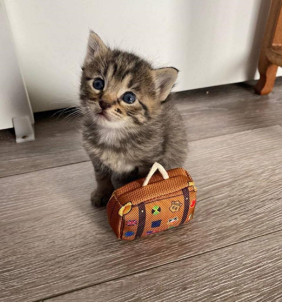 gatto che parte