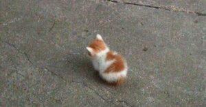 gattini minuscoli-gatto arrabbiato