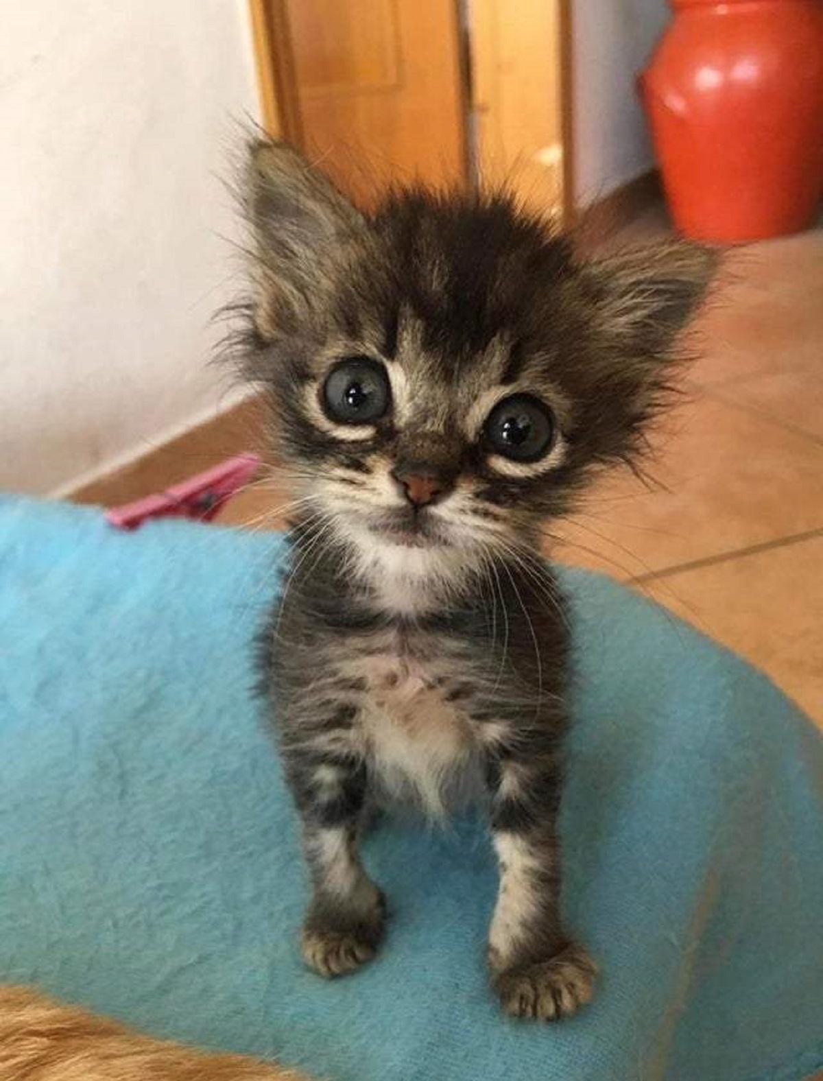 gattini minuscoli-occhioni