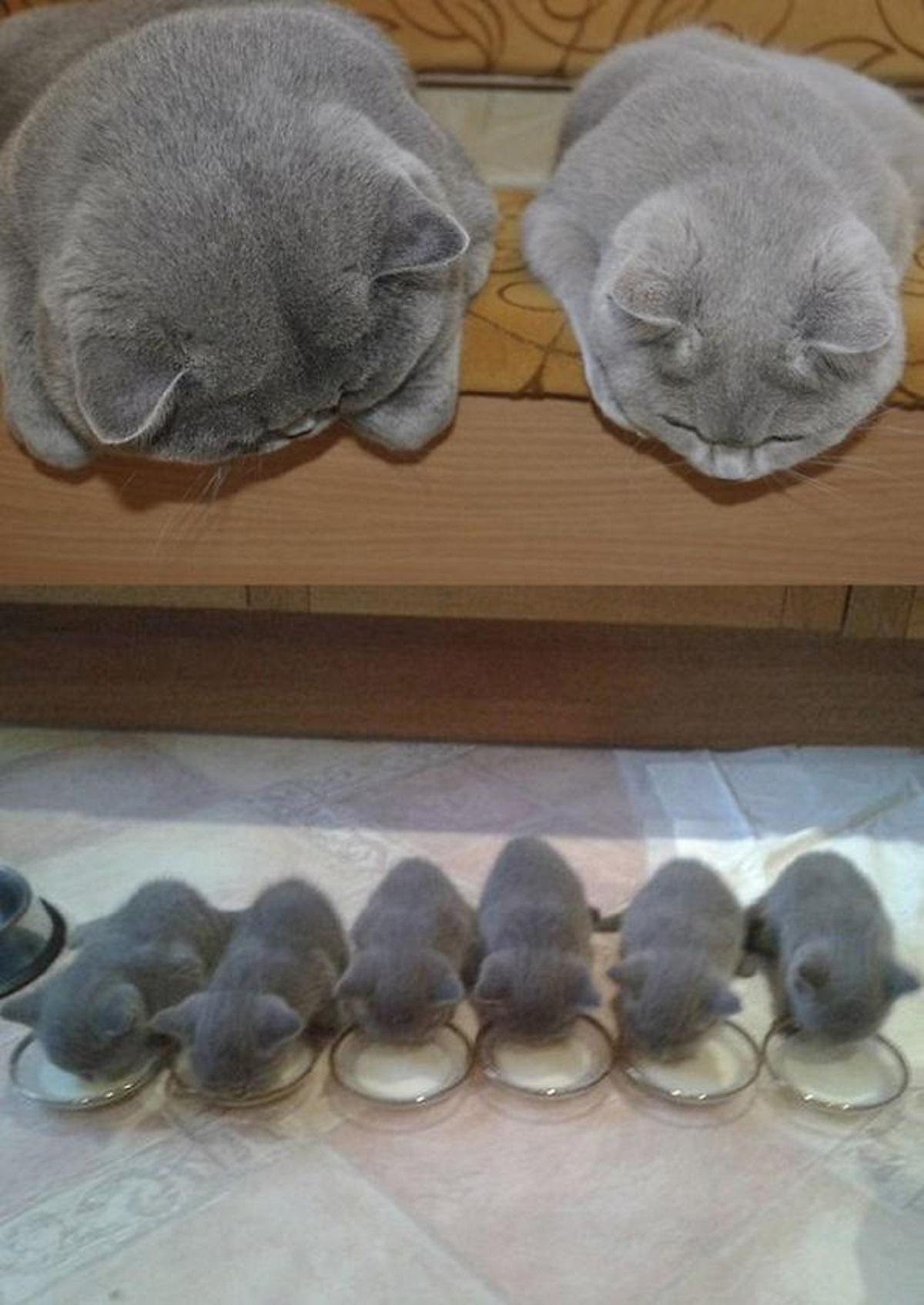 gattini minuscoli-famigliola