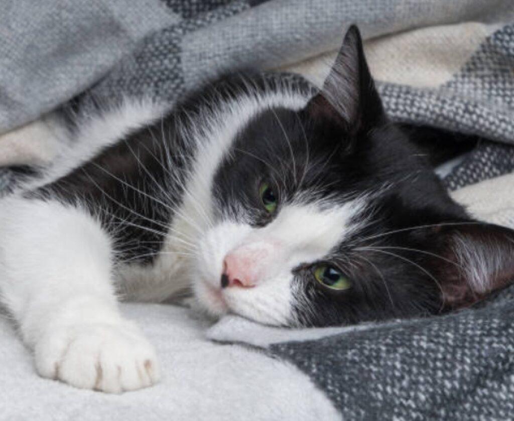 toby gattino 4 anni vive londra