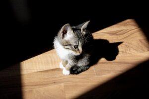 gattino in ombra