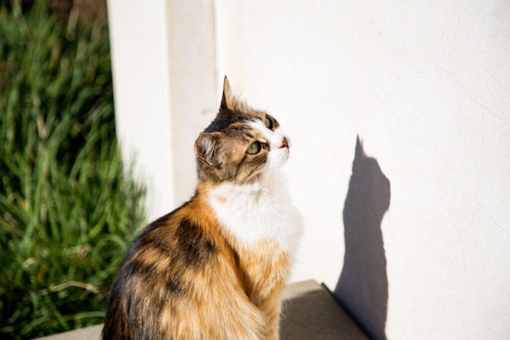 gatto guarda il muro
