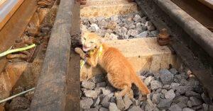 gattino binari salvato